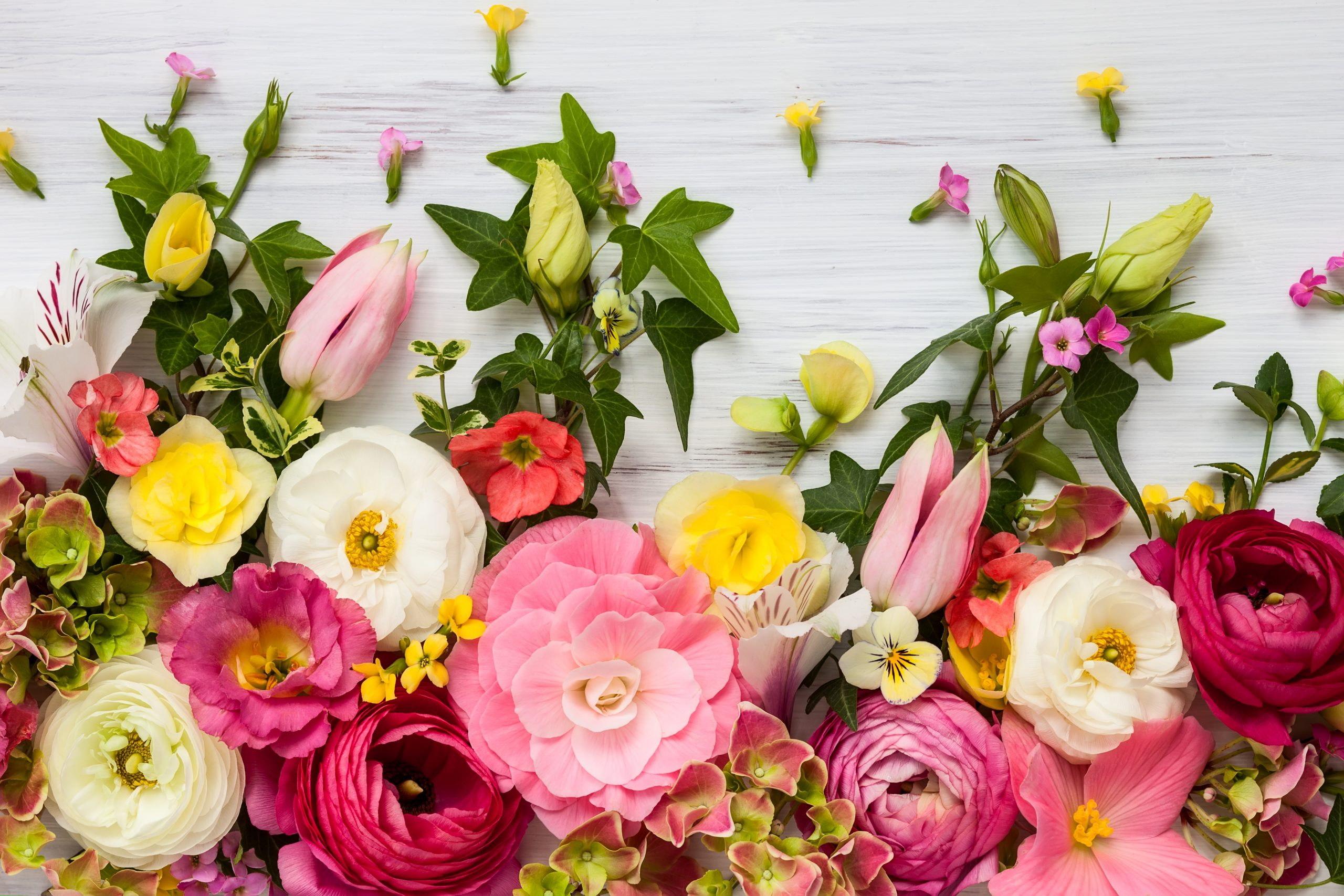 different, colorful flowers on a white background