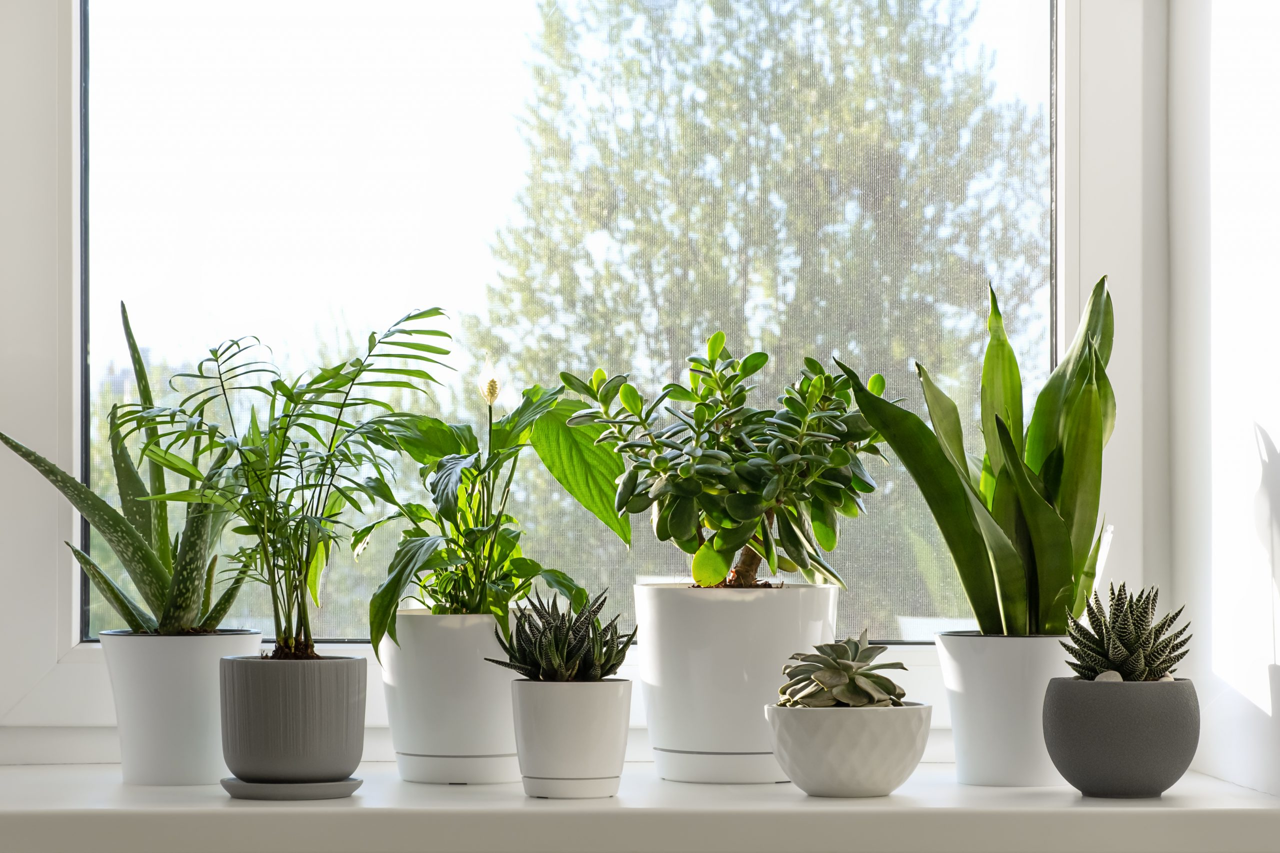 two rows of potted plants