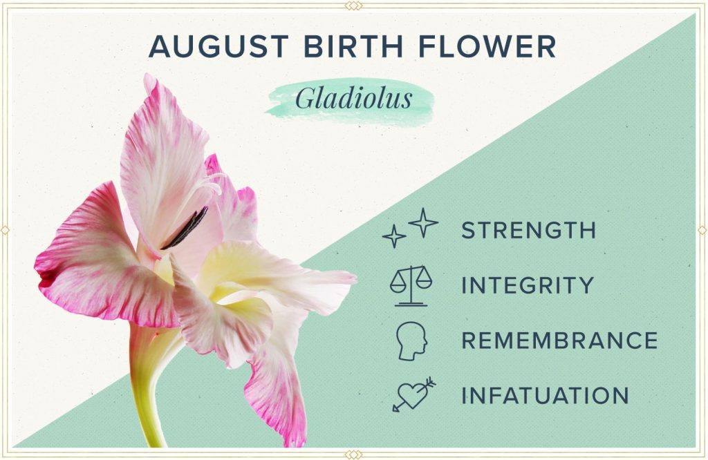 august birth flower gladiolus meaning and symbolism