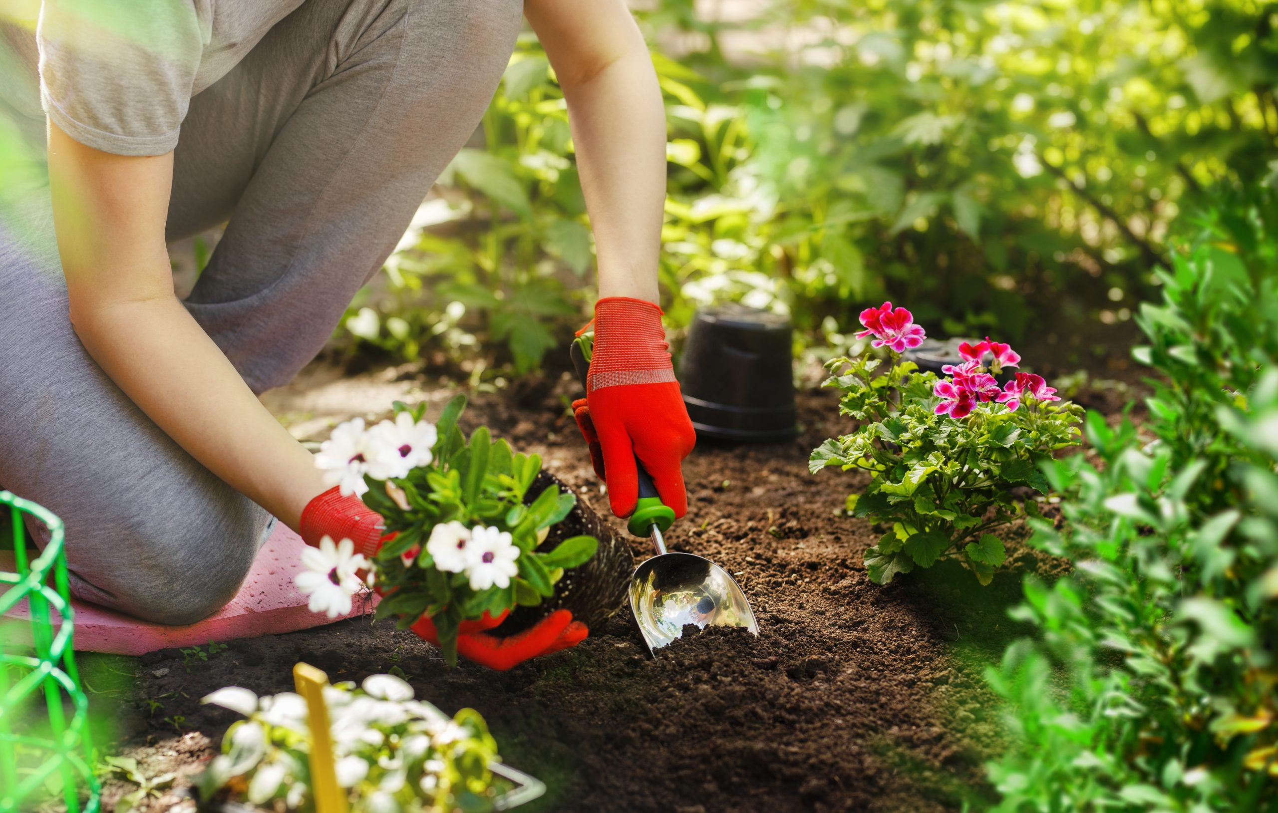 person planting flower in soil