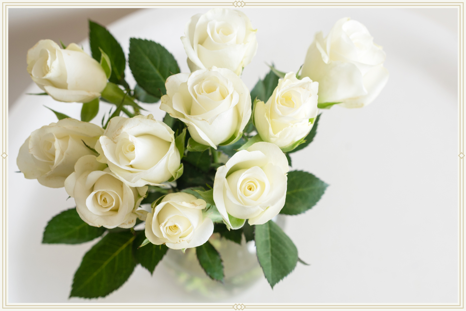 close-up shot of ivory roses