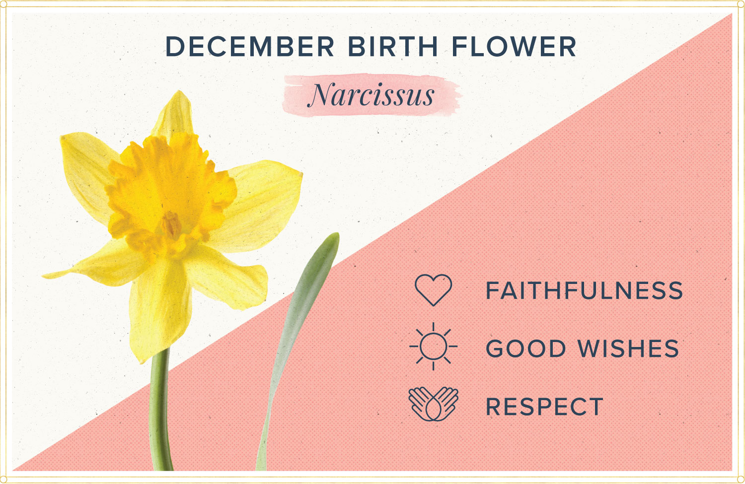December birth month flower meaning narcissus