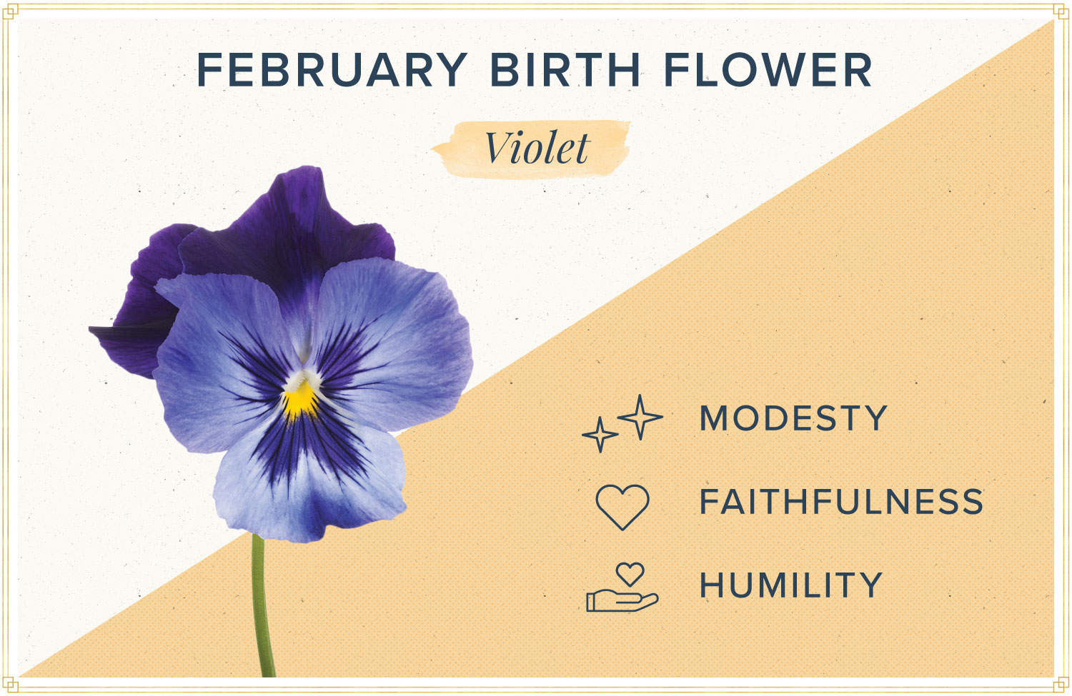 February birth month flower meaning voilet