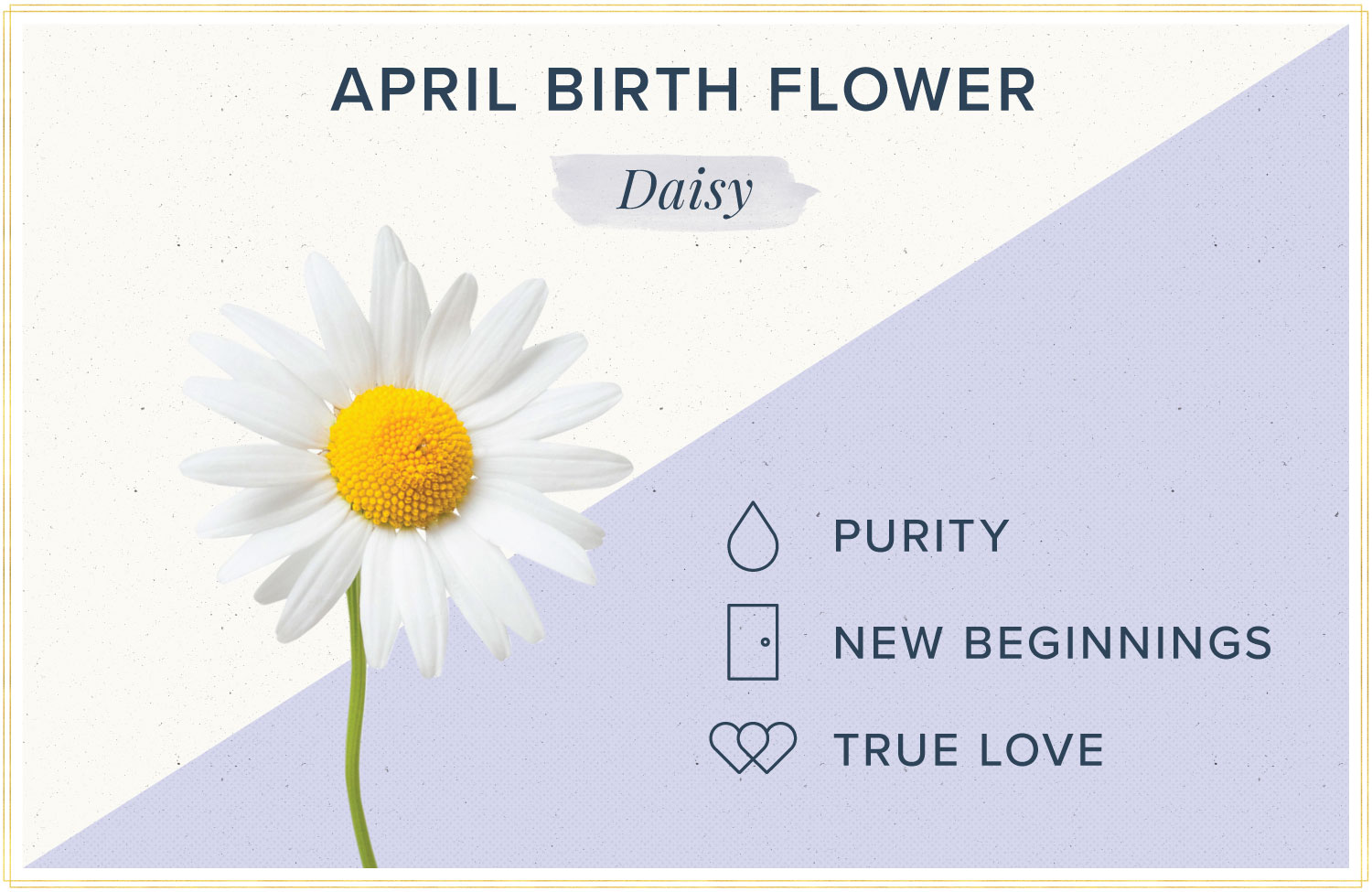 April birth month flower meaning daisy