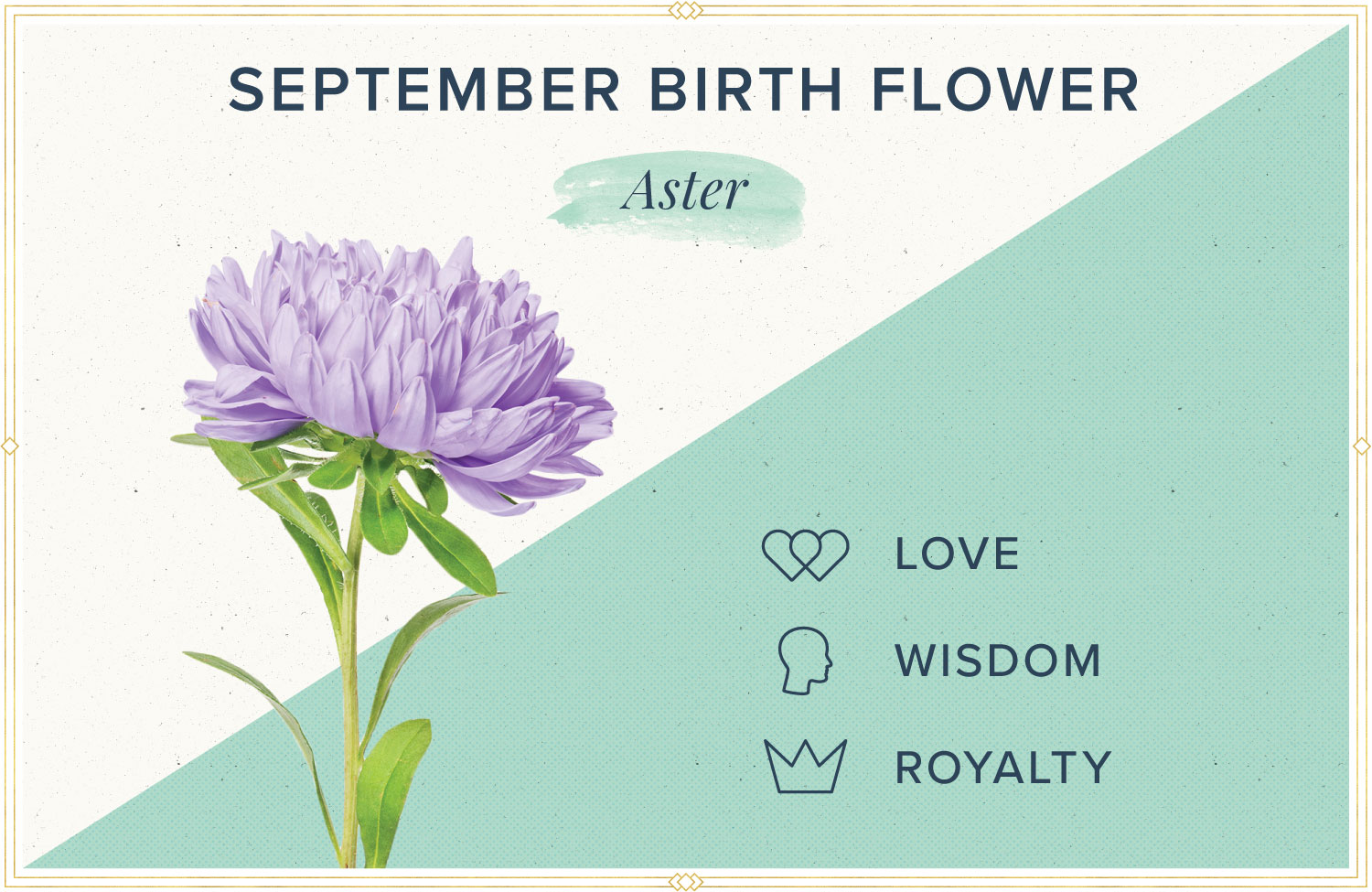September birth month flower meaning aster