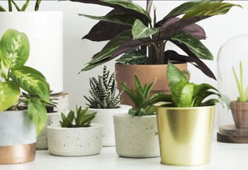 potted plants on white table