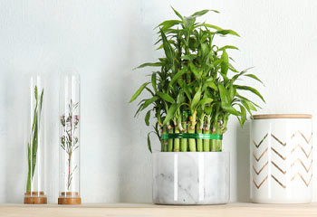a shelf with a marble pot and bamboo inside and a white decorative jar