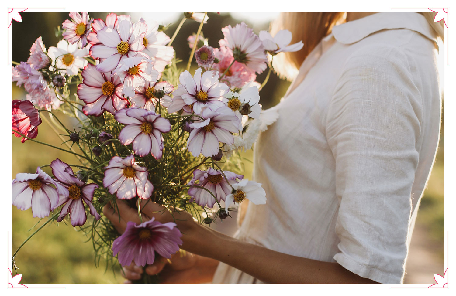 woman holding cosmos flowers
