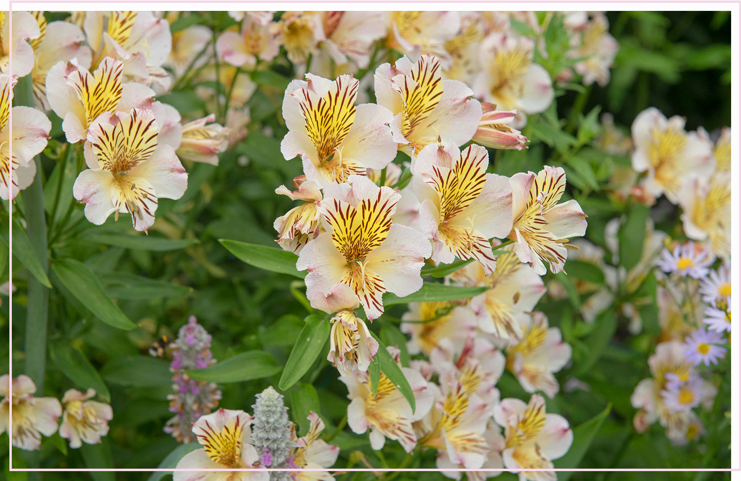 photo of white and yellow flowers