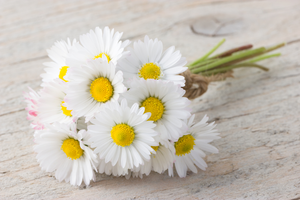 bouquet of white daisies laying on wood surface